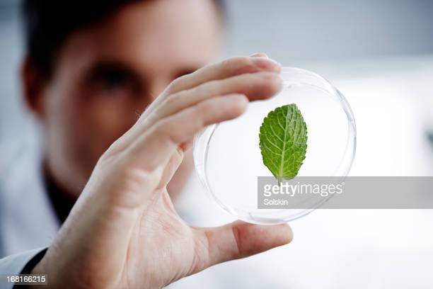 Man examining a green leaf in laboratory