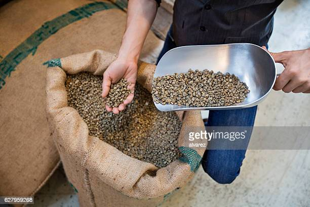 Man examining quality of raw coffee beans