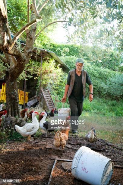 Man feeding chickens on his farm