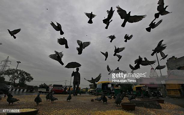 A man feeding pigeons as clouds engulf the city since morning after rains lashed on June 14 2015 in New Delhi India The national capital sizzling...