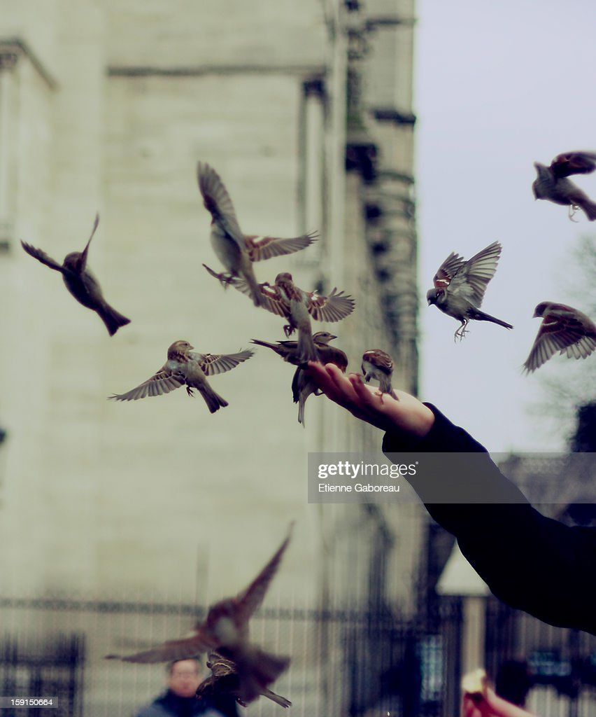 CONTENT] A man feeding sparrows and other birds in front of Notre-Dame Cathedrale, Paris, France, La Cité Island.