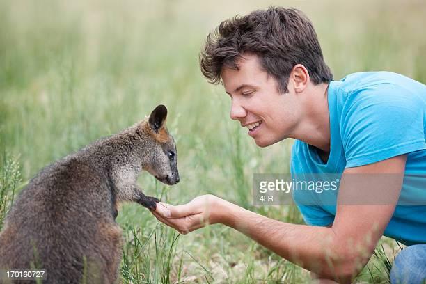 Man feeding Wallaby in Wildlife, Outback Australia
