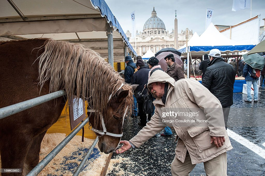 A man feeds a horse in front of the Saint Peter Basilica, during a traditional day of blessing of the animals, on January 17, 2013 in Vatican City, Vatican. Every year, during the feast of St. Anthony the Abbot, the traditional blessing of the animals is celebrated.