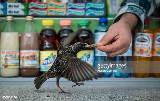 A man feeds a little birds in front of a kiosk on January 21 2016 in Berlin
