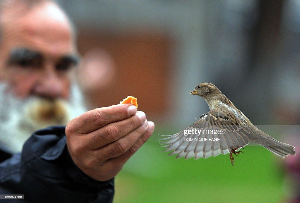 A man feeds a sparrow in the garden of El Prado museum in Madrid on November 16, 2012.