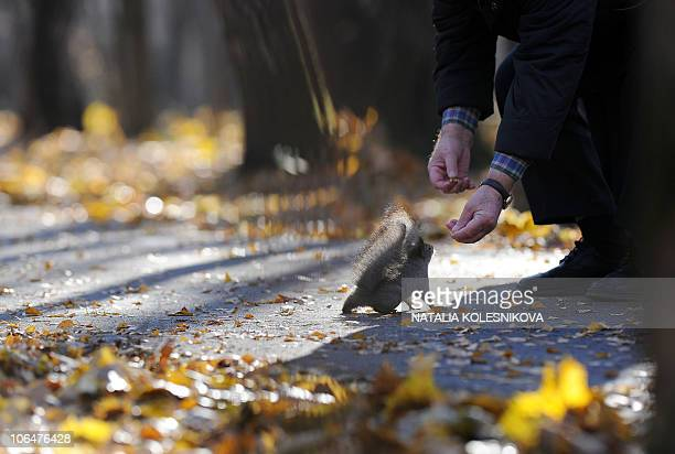 A man feeds a squirrel in a Moscow park on October 31 2010 AFP PHOTO / NATALIA KOLESNIKOVA