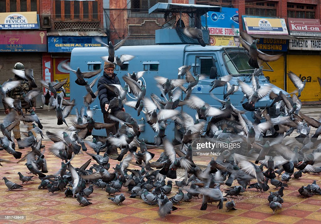 A man feeds pigeons during a strict curfew on the seventh consecutive day, imposed after the execution of alleged Indian parliament attacker Mohammad Afzal Guru on February 15, 2013 in Srinagar, the summer capital of Indian Administered Kashmir, India. Afzal Guru, from Sopore town in the north of Kashmir, was hung on February 09 for his role in the 2001 Indian parliament attack which left 14 dead. The hanging has further strained relations between India - who blamed the attack on 'Pakistan backed' militant group Jaish-e-Mohammed - and neighbouring Pakistan and has seen an military increase from both along the border.Curfew was lifted from some parts of Srinagar after four days.