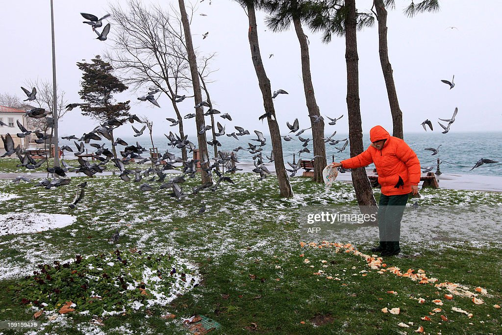A man feeds pigeons on the Anatolian side of Istanbul on January 9, 2013. Heavy snowfall blanketed Turkey's commercial hub Istanbul, a city of 15 millions, paralysing daily life, disrupting air traffic and land transport. AFP PHOTO/MIRA