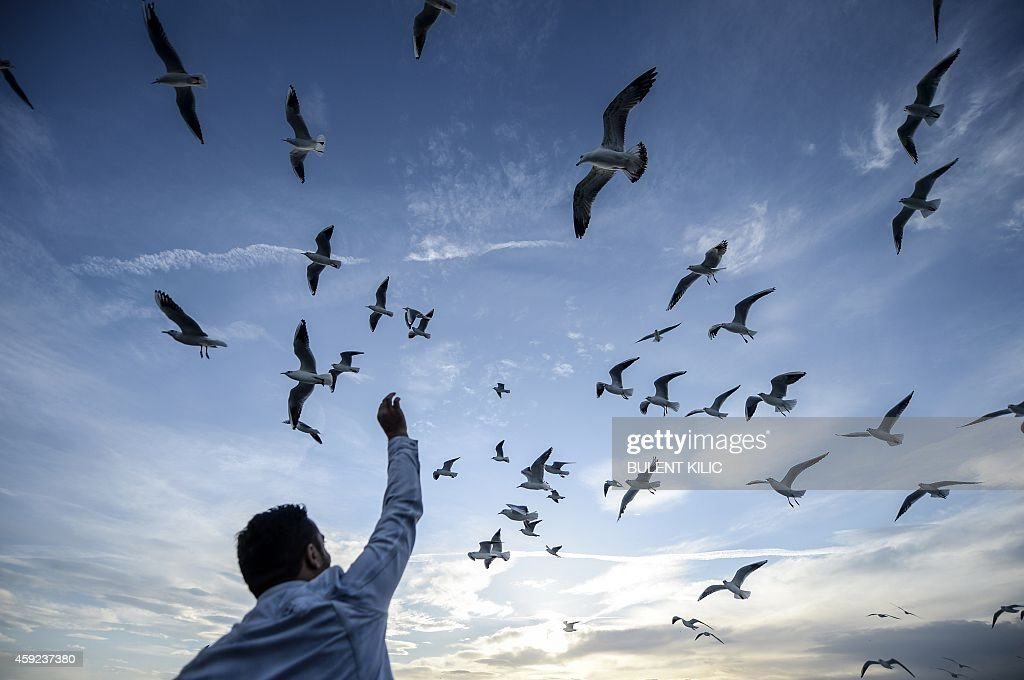 A man feeds seagulls as they travel on the Bosphorus on November 19, 2014, in Istanbul.