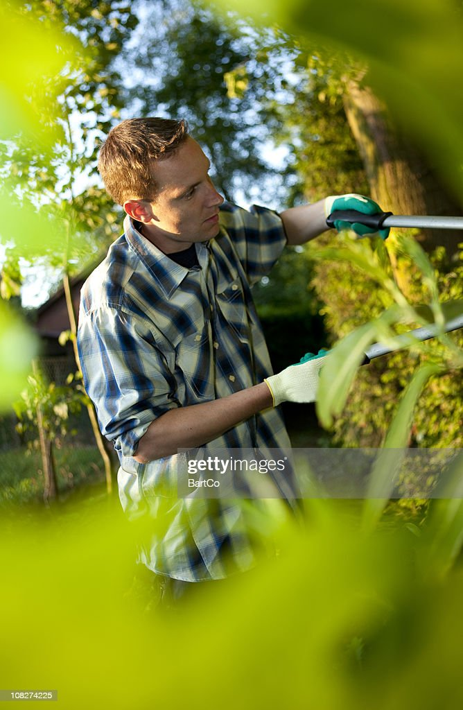 Man Gardening and Pruning Bushes with Shears : Stock Photo