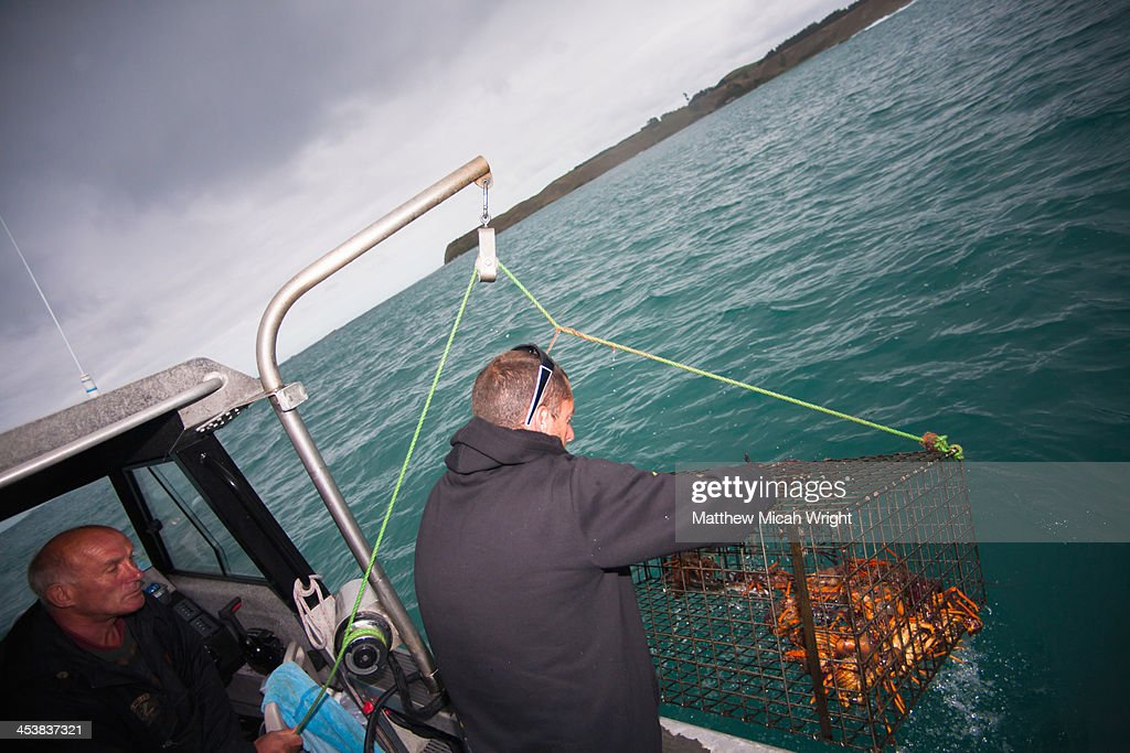 A man goes lobster fishing in Kaikoura