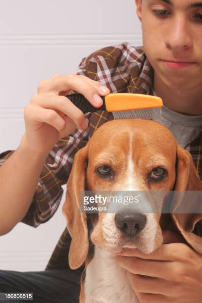 Man grooming his dog with a flea comb
