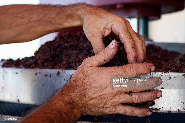 A man handling crushed grapes in a vineyard, close-up of hands