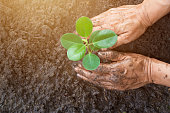 Man hands planting the young tree while working in the garden, ,Ecology concept