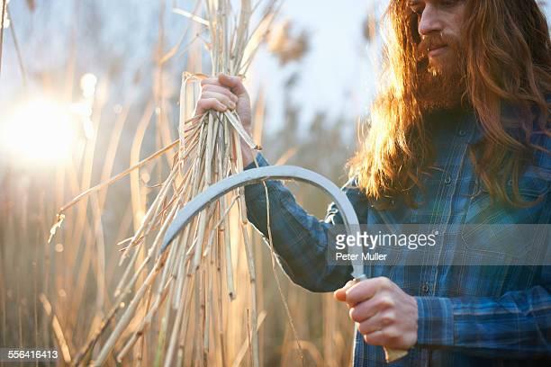 Man harvesting wheat with scythe