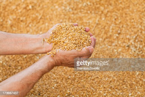Man having wheat in his hands