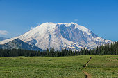Man hiker walking on the Grand Park Trail, with Mount Rainier in the background (Mt Rainier National Park)
