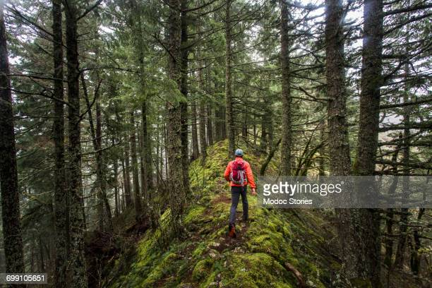 RUCKEL RIDGE, OREGON. A man hiking alone in the woods climbs a mossy ridge on a foggy, misty afternoon.