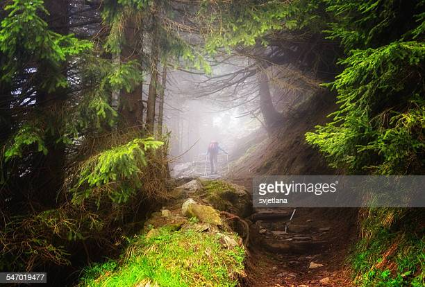 Man hiking in the woods, Appenzeller, Switzerland