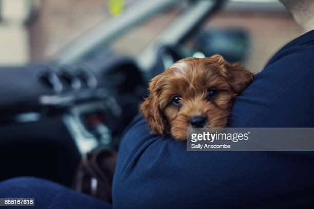 Man holding a puppy dog in a car