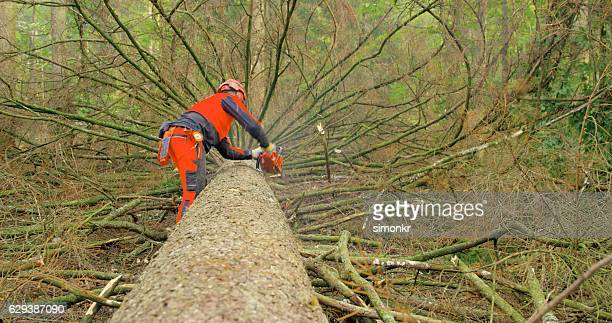 Man holding chainsaw while cutting tree