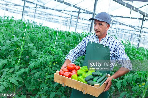 Man Holding Crate Of Fresh Vegetables