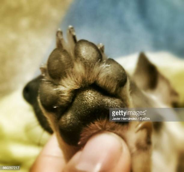 Man Holding Dogs Paw
