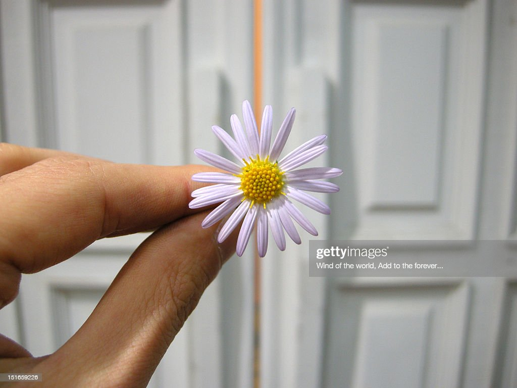Man holding flower in hand : Stock Photo