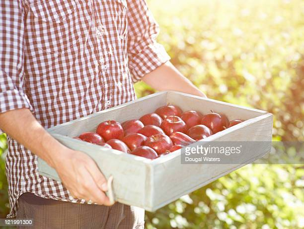 Man holding fresh apples in wooden tray.