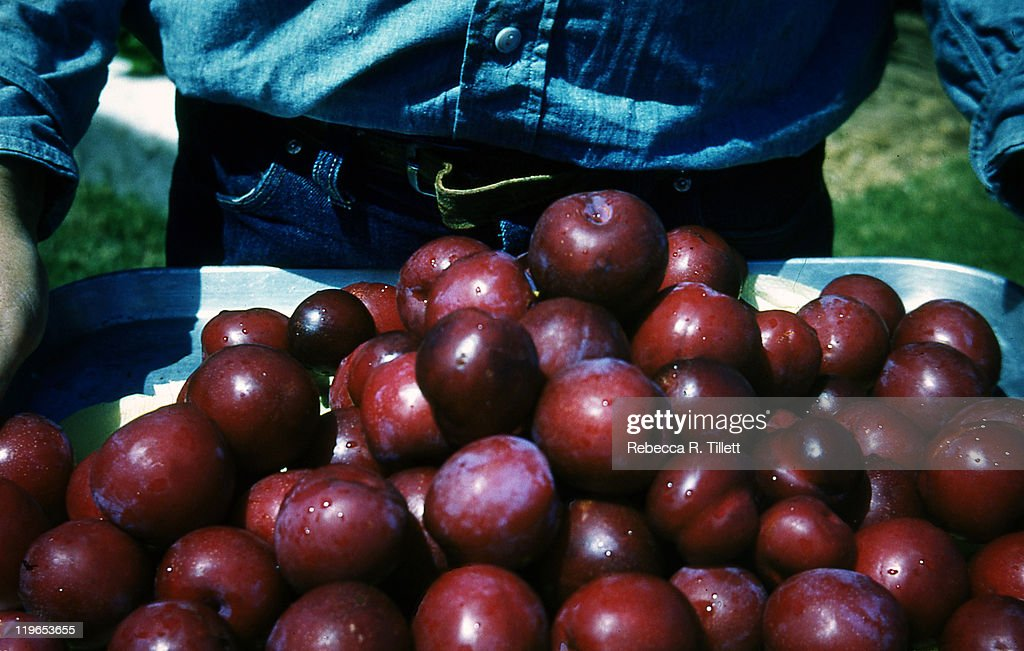 Man holding fresh plums : Stock Photo