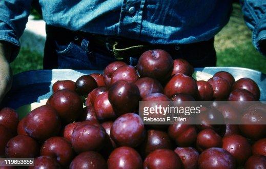 Man holding fresh plums : Stock Photo