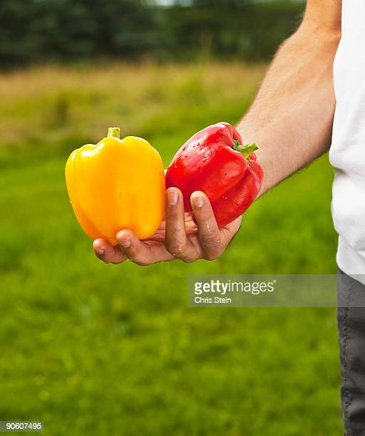 Man holding fresh red and yellow bell peppers.