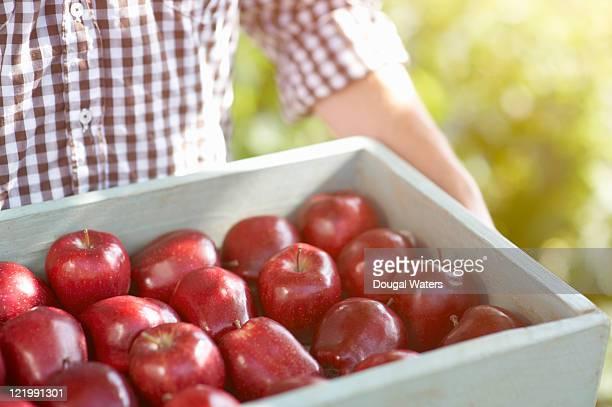 Man holding freshly picked apples.