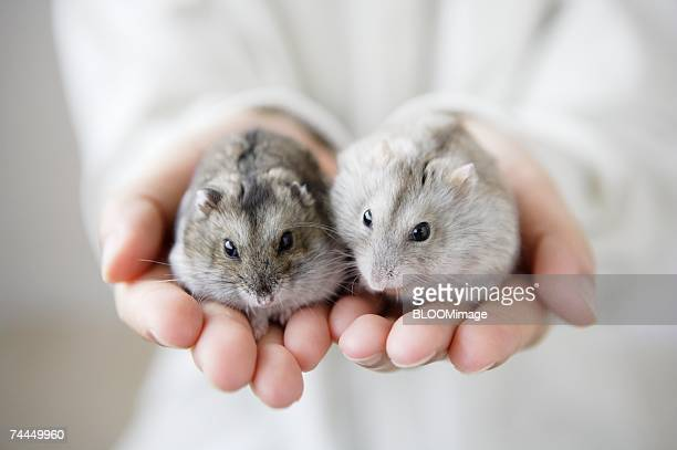 Man holding hamsters