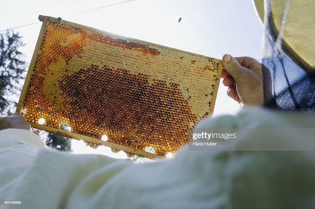 Man holding honey comb, rear view