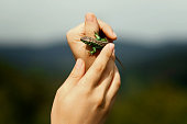 man holding in hands colorful green lizard on background of woods in summer mountains, space for text