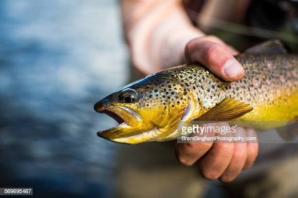 Man holding rainbow trout