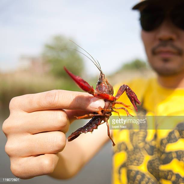 Man holding red crayfish in wetland