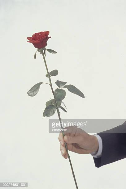 Man holding red rose, Close-up of hand