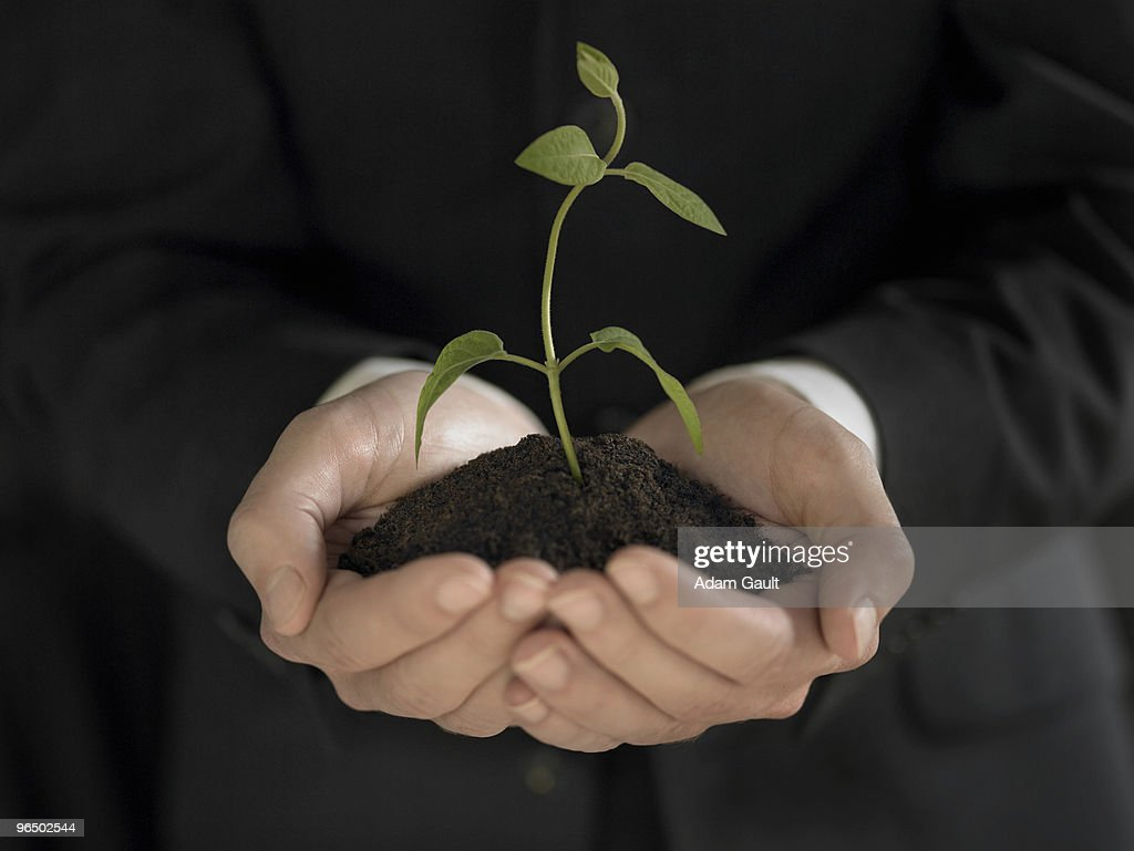 Man holding seedling and soil : Stock Photo