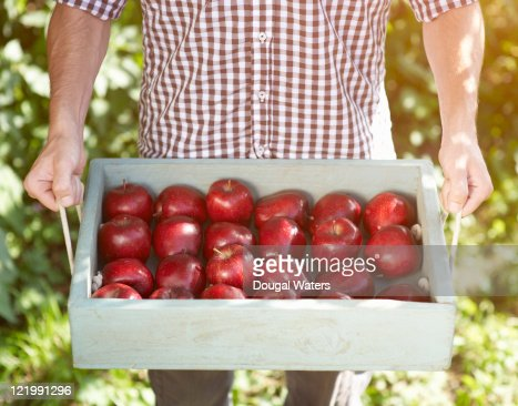 Man holding tray of red apples. : Stock Photo