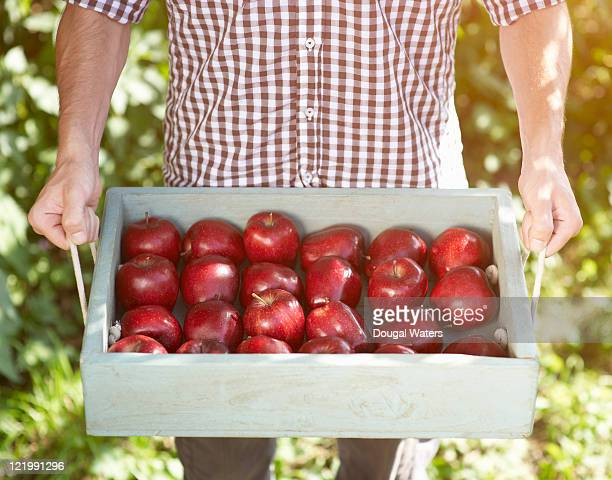 Man holding tray of red apples.