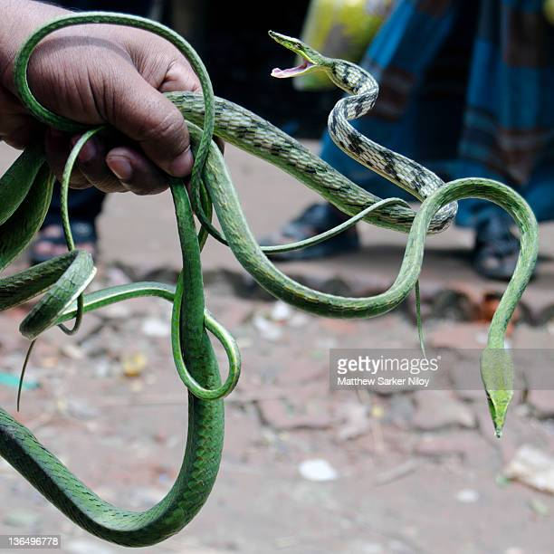 Man holding two green snakes