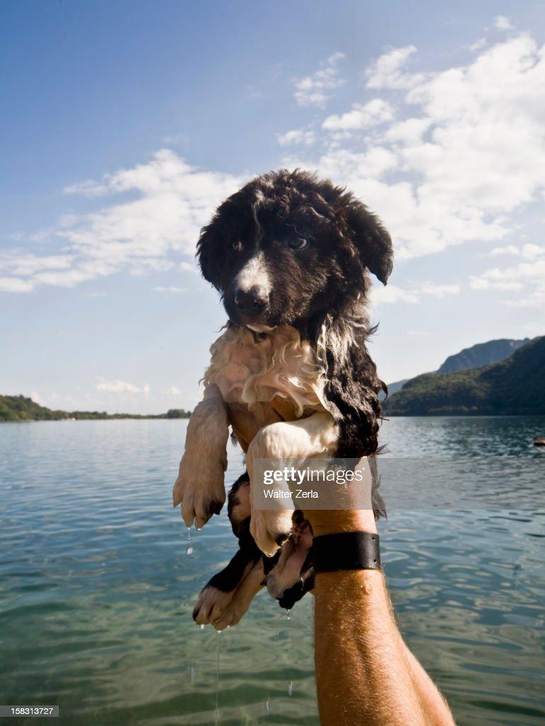 Man holding wet puppy near lake : Stock Photo