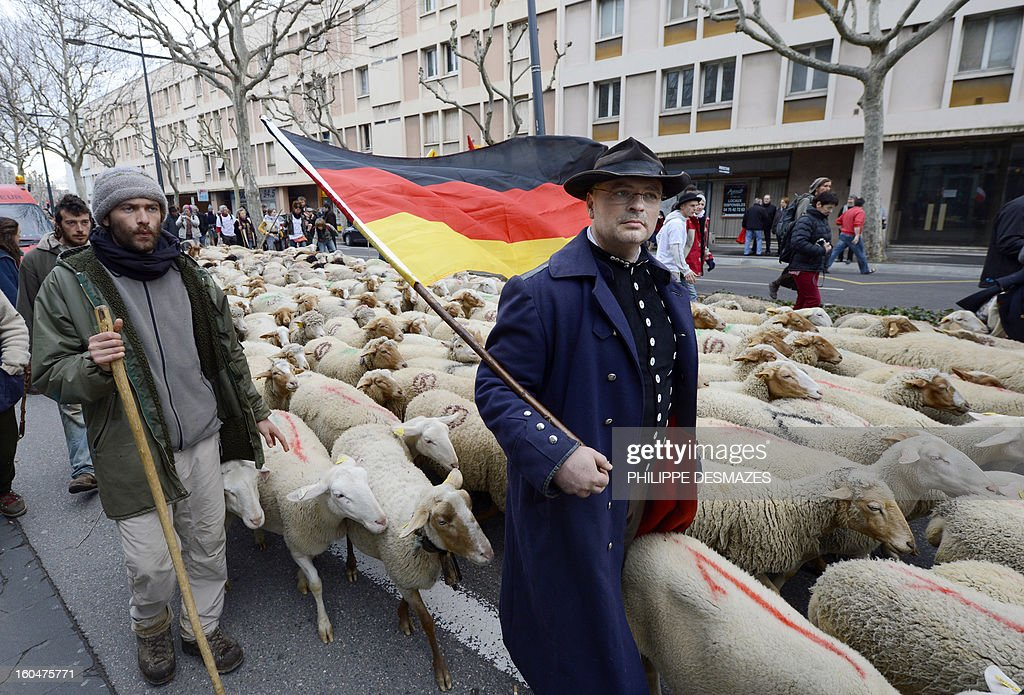 A man holds a German flag as French and German shepherds demonstrate with a flock of ewes, on February 1, 2013, in a street of Valence, southeastern France, to protest against the electronics chip RFID (Radio Frequency Identification) system imposed on their animals. The shephards are protesting over the mandatory tracking of all of their animals with electronic chips after new European Union legislation passed to impose this on all animals born since 2010.