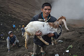 A man holds a goat released by Hindu devotees of the Tengger tribe during the Yadnya Kasada festival on the crater of Mount Bromo in Probolinggo on...