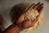 A man holds a handful of rice grains at a market on July 17 2008 in Dhaka Bangladesh Bangladesh has recently closed nearly 2000 rice mills because...