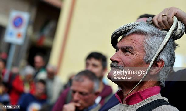 A man holds a snake during an annual procession dedicated to Saint Domenico in the streets of Cocullo in the Abruzzo region on May 1 2014 AFP PHOTO /...