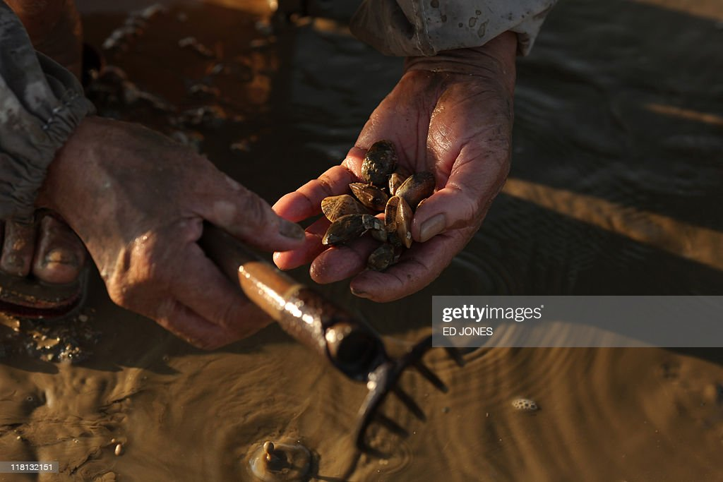 A man holds clams as he digs at low tide on Lantau island, Hong Kong on July 3, 2011. Whether for business or pleasure, the tradition of digging for clams is a regular draw for residents of Hong Kong's outlying islands. Bounty hunters prepared to spend hours hunched over barnacled rocks can expect a sure reward for their currency of clams from the ever-present nearby seafood establisments only too happy to serve up a hard-won catch.