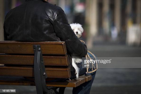 A man holds his dog on February 18 2013 in Frankfurt am Main AFP PHOTO / FRANK RUMPENHORST /GERMANY OUT